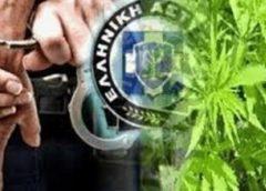 4 συλλήψεις για παράβαση της νομοθεσίας περί ναρκωτικών